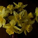 Daffodil party I by Roxane Bay