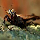 Dead Leaf Mantis - Bolivia by Jason Weigner