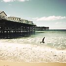 Seagull and the Pier by Kimberly Palmer