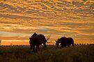 Golden Sunrise - Camooweal NW Qld by Carmel Williams
