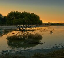 Spoonbills at Dusk - Port Hacking by Jeff Catford