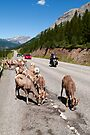 Living traffic jam  by zumi