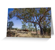 Bloodwoods, horseman and cattle - Camooweal Greeting Card