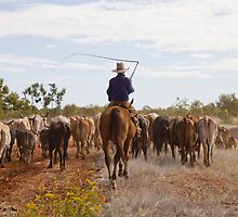 Stockman with cattle - Camooweal by Carmel Williams