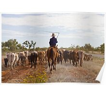 Stockman with cattle - Camooweal Poster