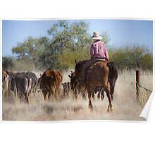 Stockman with cattle at Camooweal 2 Poster