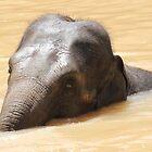 Elephant by Dave Cauchi
