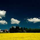 Rape seed in Germany by Quasebart