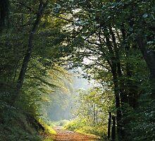 Autumn walk by Quasebart