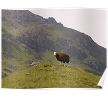 The Lake District: The Lonely Sheep Poster