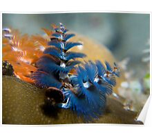 Christmas tree worm. Poster