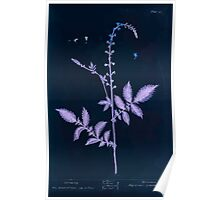 A curious herbal Elisabeth Blackwell John Norse Samuel Harding 1737 0064 Agrimony Inverted Poster