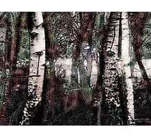 Zauberwald - Die Wächter / Magic Forest - The Guardians Photographic Print