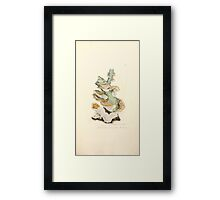 Coloured figures of English fungi or mushrooms James Sowerby 1809 0567 Framed Print