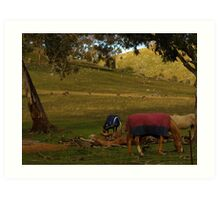 A Late Afternoon Rural Scape Art Print