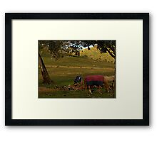 A Late Afternoon Rural Scape Framed Print