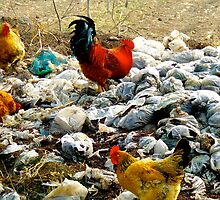 """Rubbish rooster"", Yongji, Shaanxi, China by Jennii Booth"