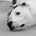 Dog Day by carrolk