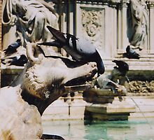 Fonte Gaia ( Siena ) by Alessandro Pinto