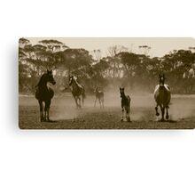 Herd of dust.. Canvas Print