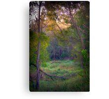 Morning sun, trees and fog Canvas Print