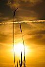 Sunset by Svetlana Sewell
