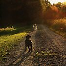 Showdown at sunset by Alan Mattison
