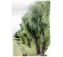 Weeping Willows of Le Verdon Poster