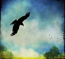 As the Crow Flies by Laura Palazzolo