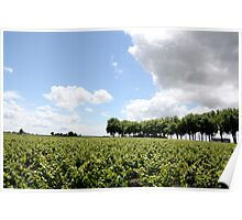 Vines of the Vineyards Poster