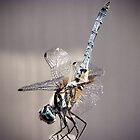 Dragonfly by venny