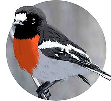 Scarlet Robin by Ted McFarland