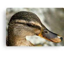 Duck? Canvas Print