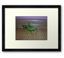 Skakavac (Orthoptera) Framed Print