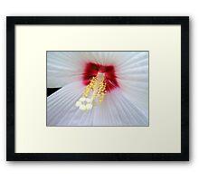 White Lace © Framed Print