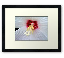 White Lace © Framed Print