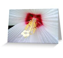 White Lace © Greeting Card