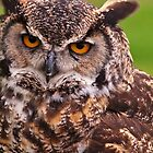 Great Horned Owl by Aler