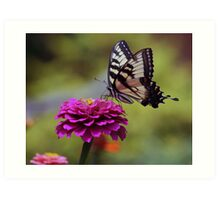 Yellow Tiger Swallowtail Butterfly Art Print