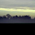 Foggy forest by HannahT
