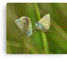 Two Blues Canvas Print