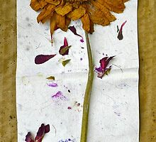 Botanical Collage 8 by Caren