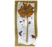 Botanical Collage 8 Poster