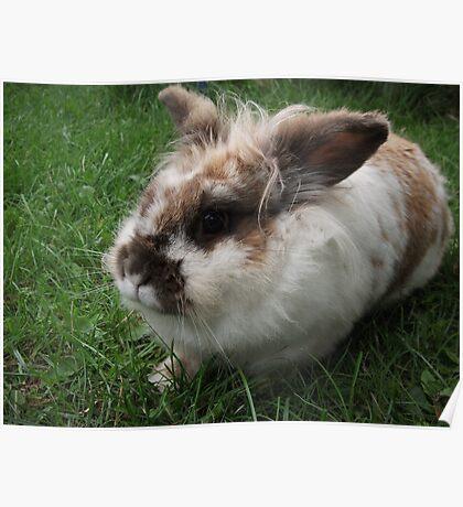 A Rabbit's Beady Eye Poster