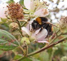Sleepy Bee by sarnia2