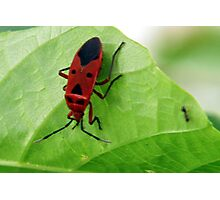 Insect 3 Photographic Print