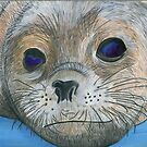 seal pup by Leeanne Middleton