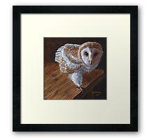 Baby Barn Owl Framed Print