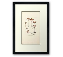 Coloured figures of English fungi or mushrooms James Sowerby 1809 1039 Framed Print