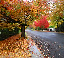 'Autumn Street Scape'  by Gavin J Hawley